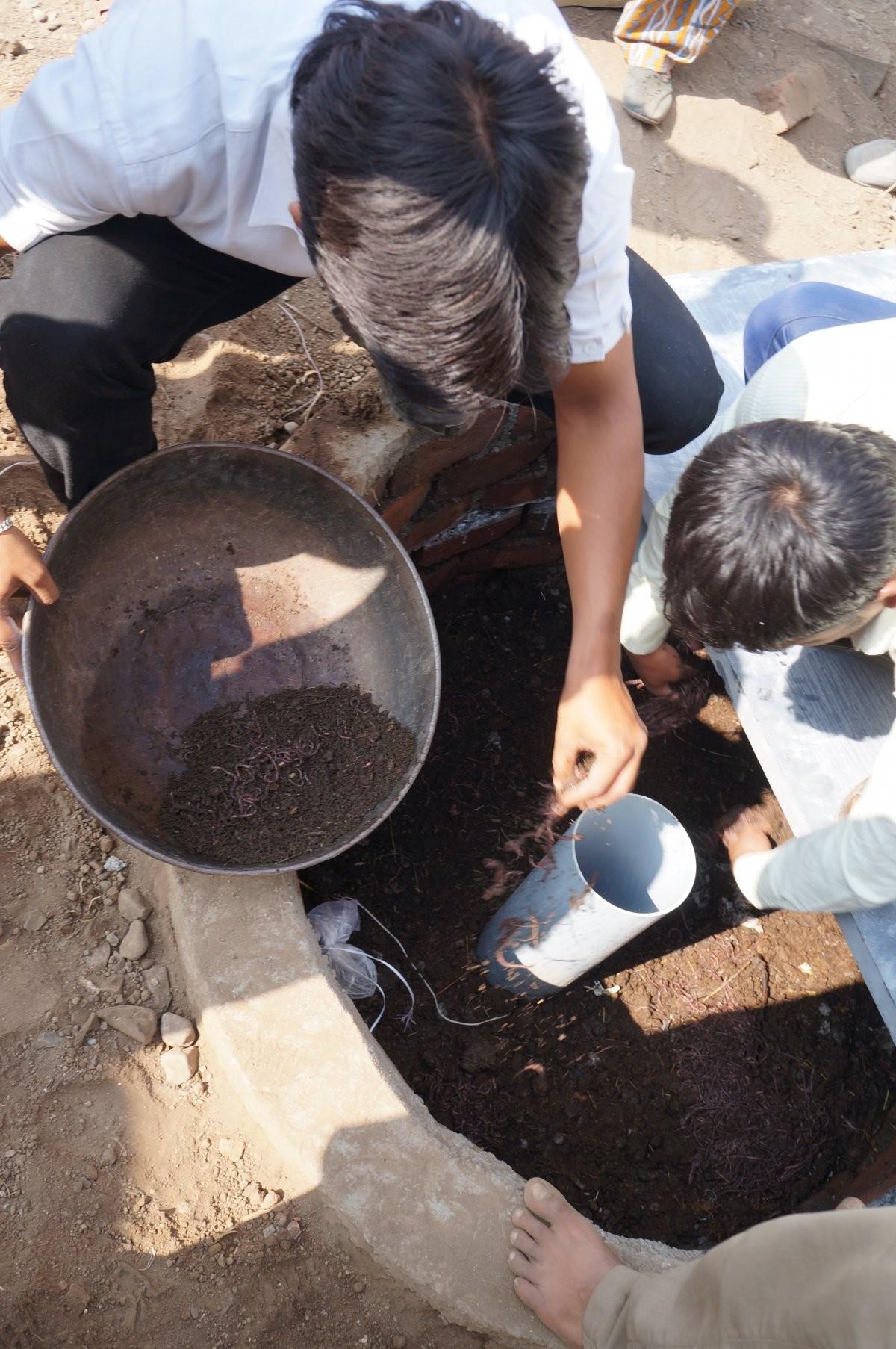 Minhocas da espécie Eisenia fetida se alimentam de dejetos humanos e materiais podres (Foto: Bear Valley Ventures)