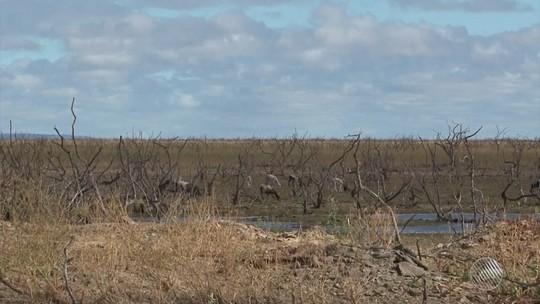 Pescadores e agricultores reclamam de prejuízos da seca em Sobradinho, na BA
