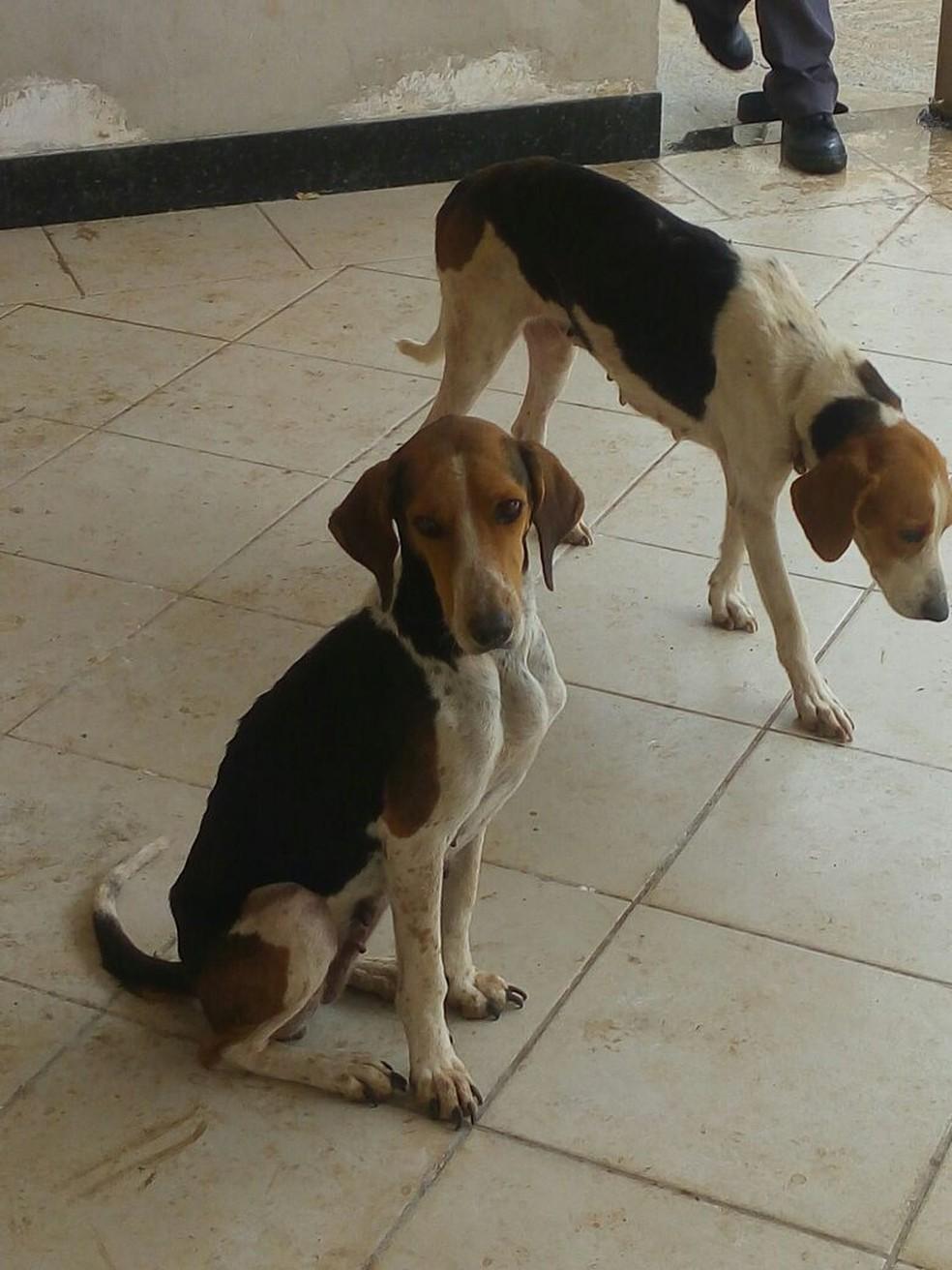 Animais estavam infestados de carrapatos (Foto: Cedida/Polícia Militar Ambiental)