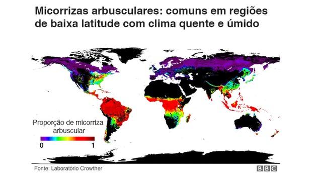 Micorrizas arbusculares (Foto: BBC)