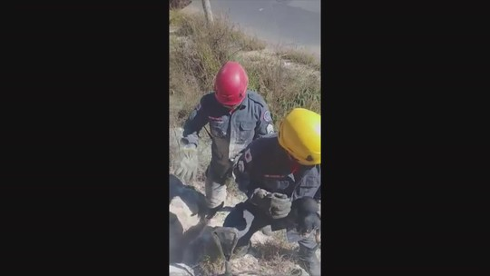Bombeiros salvam filhote de cachorro que caiu em vala em Sabará; veja vídeo