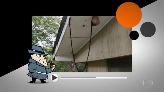 Detetive virtual: vídeo de formigas 'equilibristas' é verdadeiro ou falso?