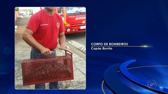 Bombeiros resgatam lagarto debaixo de berço de criança em Capão Bonito
