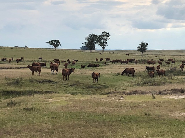 carne-boi-pasto-uruguai (Foto: Bruno Blecher/Ed.Globo)