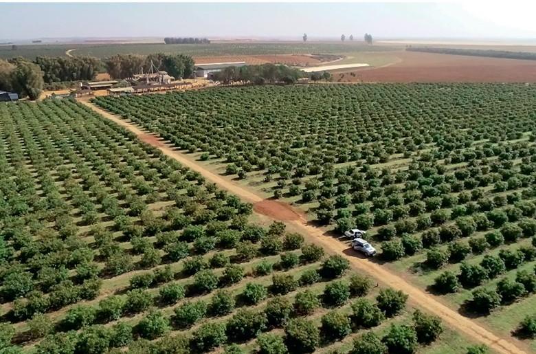 Pomar de abacate  (Foto: Reprodução/Programa Globo Rural)