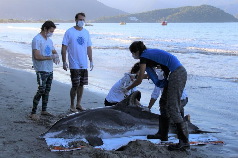 Golfinho de 2,3 metros foi encontrado por banhistas na tarde de sexta-feira (16)  — Foto: Divulgação/ Instituto Argonauta