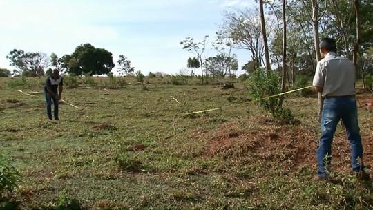Infestação de formigas preocupa pecuaristas da região noroeste do Paraná