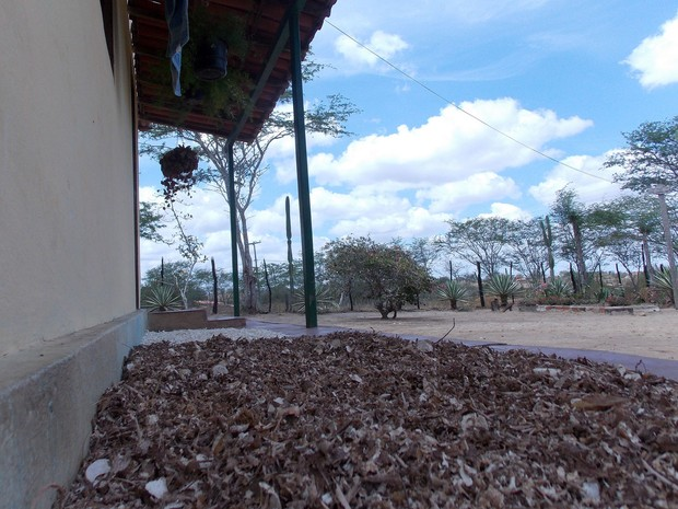 Raspas da mandioca espalhadas na varanda só foram usadas na alimentação dos animais (Foto: Henrique Mendes / G1)