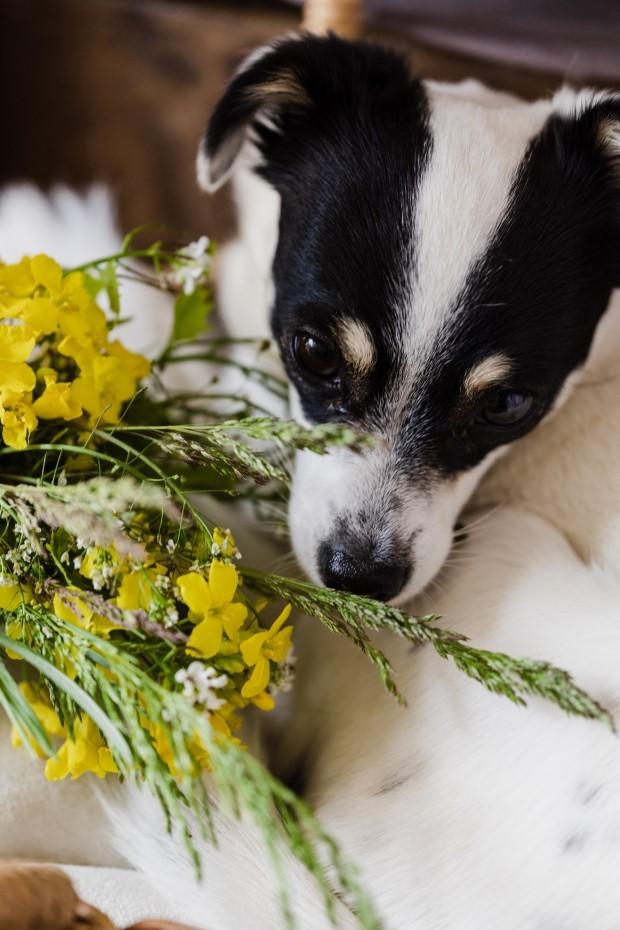 Os animais de estimação usam seu faro para obter todos os tipos de informações complexas do ambiente (Foto:  Pexels/ Karolina Grabowska/ CreativeCommons)