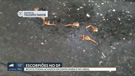Moradores de Santa Maria e do Areal relatam aparecimento de escorpiões
