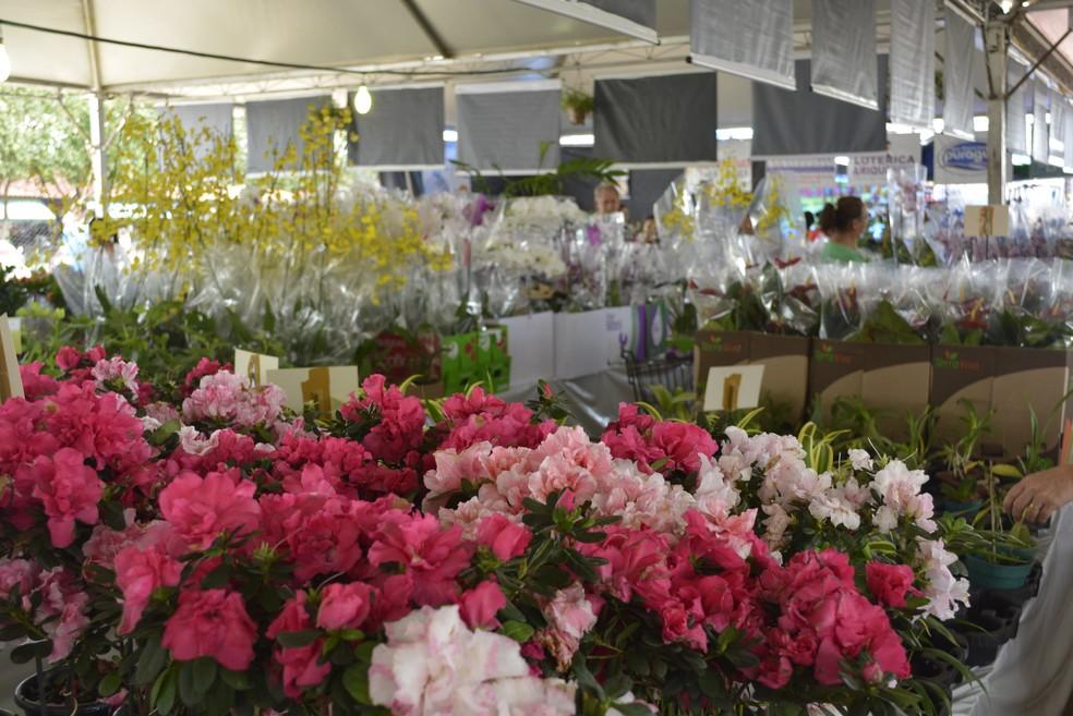 Nona Edição Do Festival Flores De Holambra é Realizado Em
