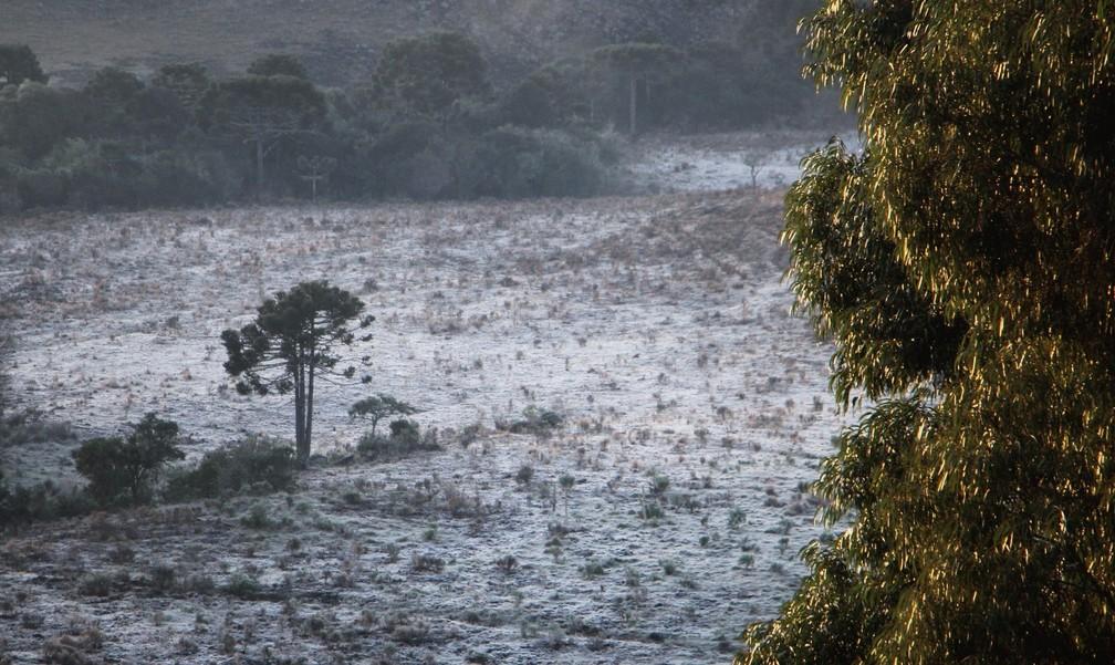 Geada cobriu vegetação em São Joaquim — Foto: Mycchel Legnaghi/Divulgação