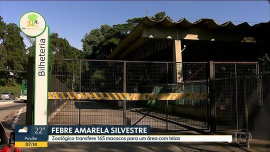 Zoológico de SP transfere 165 macacos para evitar contágio por febre amarela