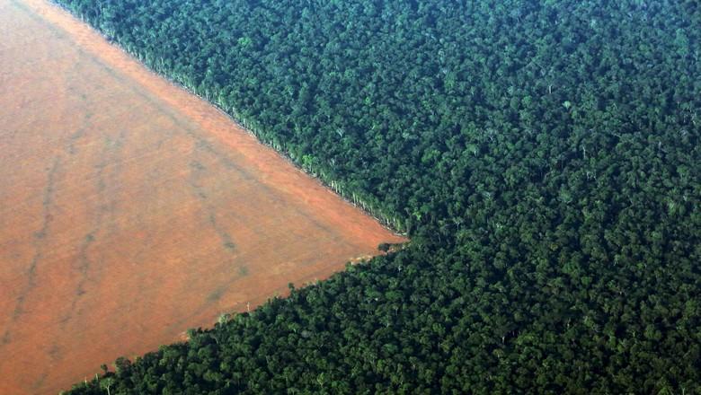 Fronteira entre a floresta amazônica e áreas agrícolas em Mato Grosso 04/10/2015 (Foto: Paulo Whitaker/Reuters)