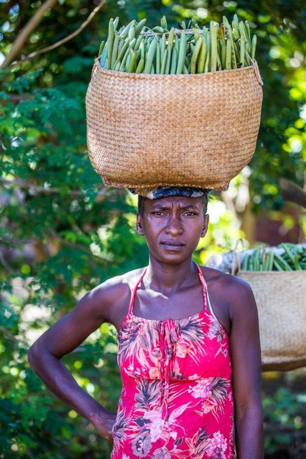 Pequenos agricultores normalmente vendem a baunilha a intermediários que coletam grandes quantidades e revendem aos exportadores (Foto: Fellipe Abreu)