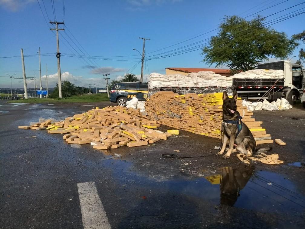 Caminhoneiro é detido na BA com grande quantidade de maconha escondida em carga de farinha — Foto: Divulgação/PRF