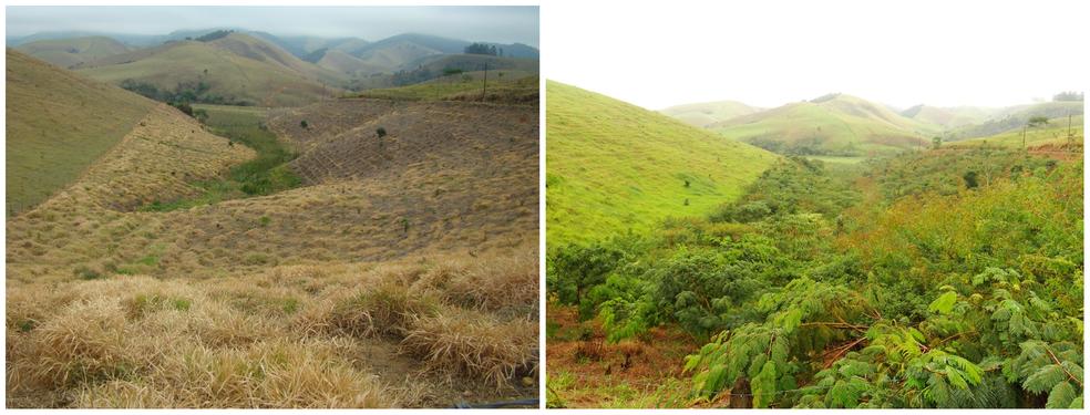 Antes e depois em uma das áreas de reflorestamento — Foto: Divulgação ONG Corredor Ecológico