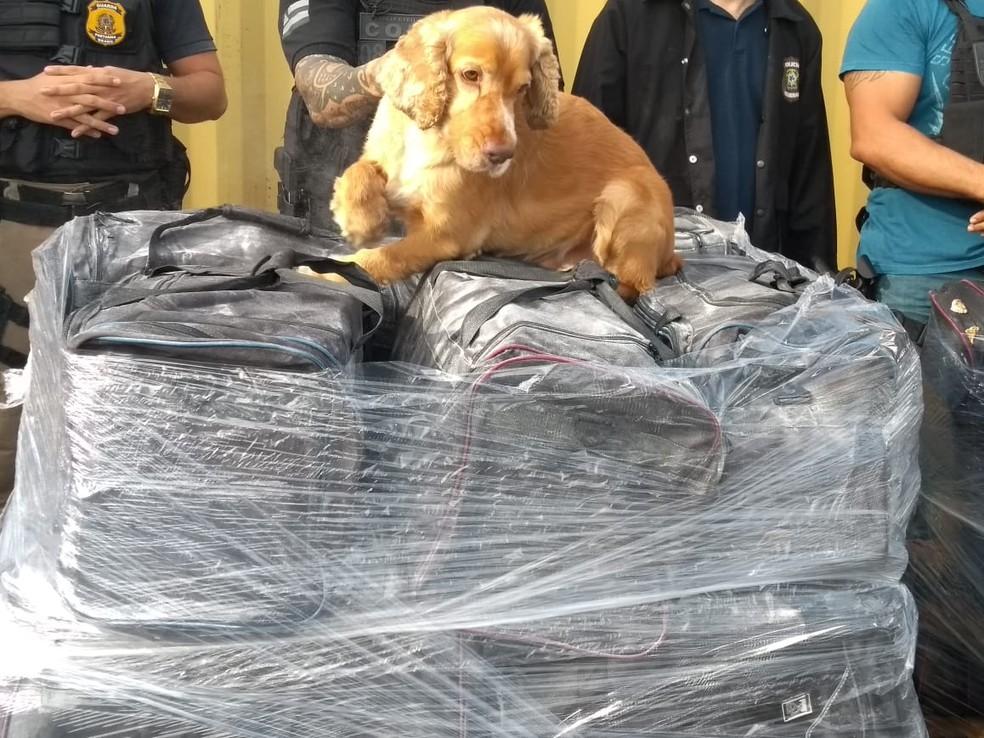 Ação contou com a ajuda de cães farejadores da Polícia Civil (Foto: Divulgação/Polícia Federal)