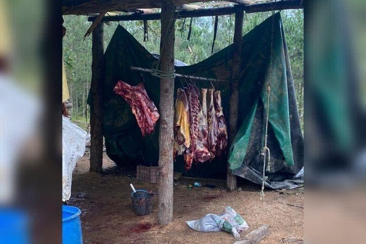 Polícia de SC investiga suspeita de venda de carne de cavalo para consumo humano