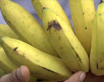 Coronavírus reduz procura por banana e preço no atacado cai 12% em uma semana