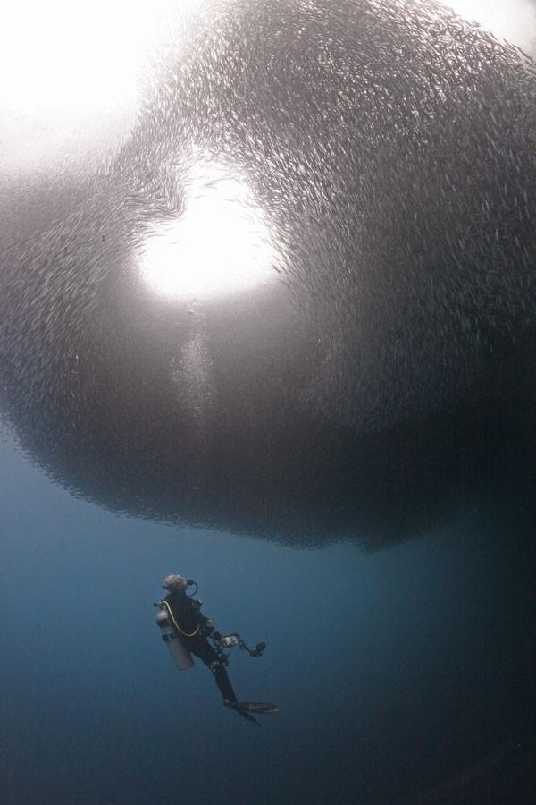 Momento em que cardume de sardinhas forma coração no fundo do mar foi clicado na costa das Filipinas (Fot Jun V. Lao/ Caters News)