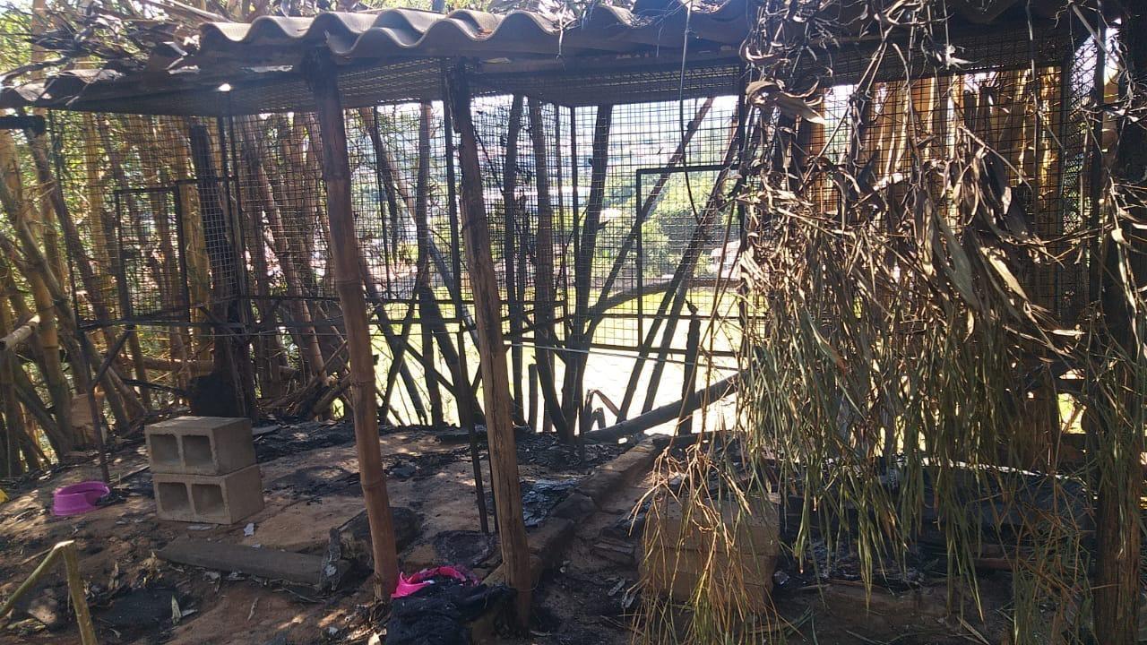 Incêndio destrói lar de gatos com 100 animais na Grande BH; pelo menos dois morreram