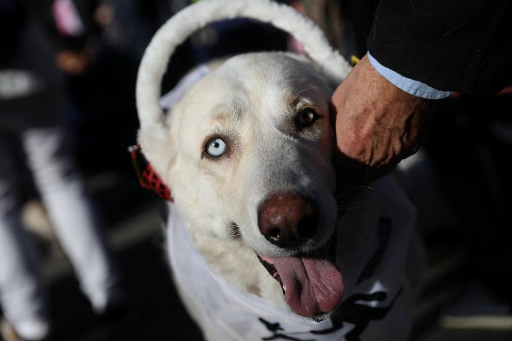 30 de dezembro - Cães desfilaram nas ruas de Madrid em um evento que já se tornou tradição na cidade: a 'San Perrestre'. O nome faz brincadeira com 'San Silvestre'. O desfile é organizado por uma ONG de resgate de animais abandonados e tem o objetivo de incentivar a adoção (Foto: Susana Vera/Reuters)