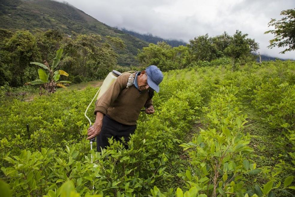 Aplicação de pesticidas em plantação de coca na Bolívia — Foto: William Wroblewski/AFP