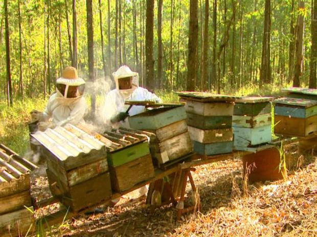Dados da CBA  indicam que os brasileiros consomem em média 128 gramas de mel por ano (Foto: Reprodução/EPTV)
