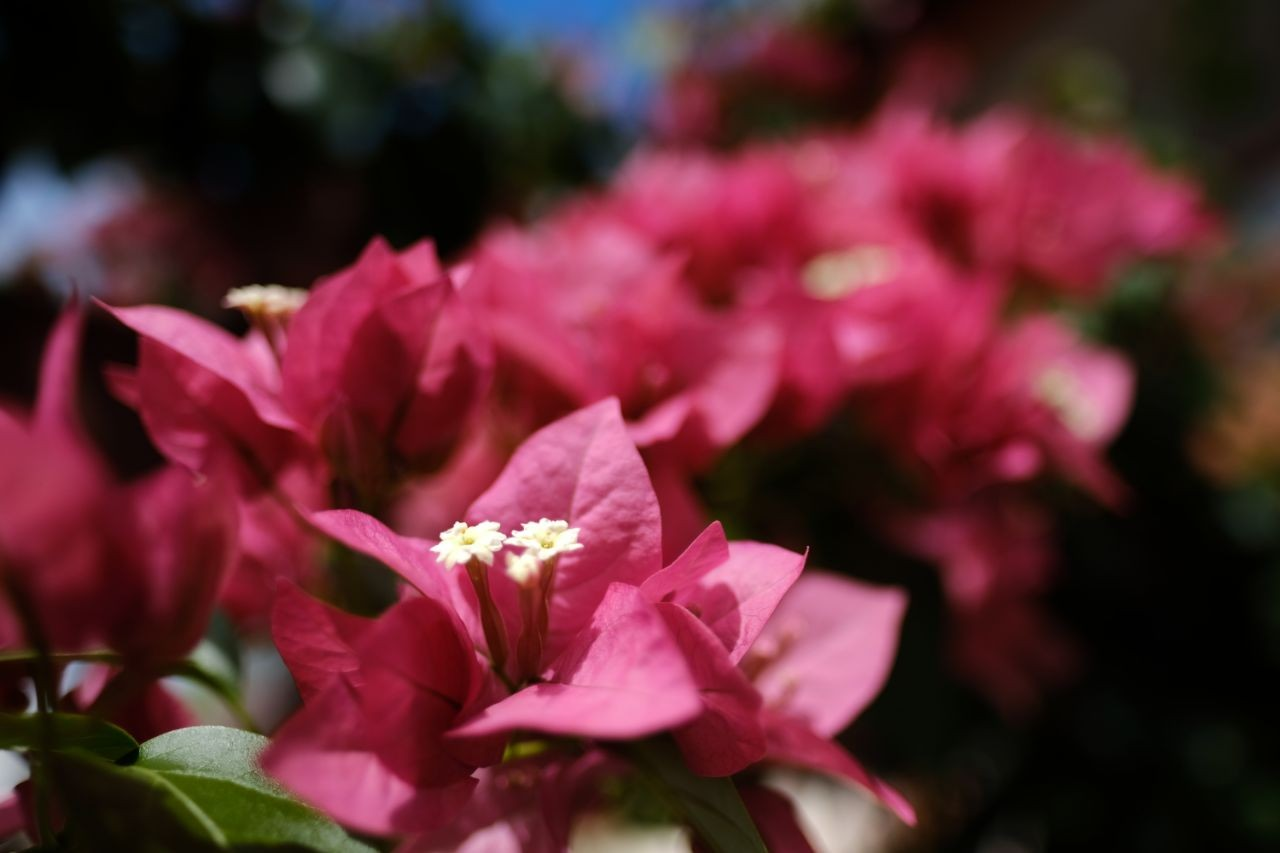 Primeiro fim de semana da Primavera será de sol e tempo seco em AL, diz Semarh - Notícias - Plantão Diário