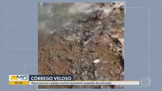 Telespectadora filma peixes mortos no Córrego Veloso, em Itatiaiuçu, na Grande BH