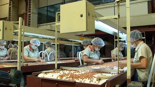 Tecnologia está transformando produção de amendoim
