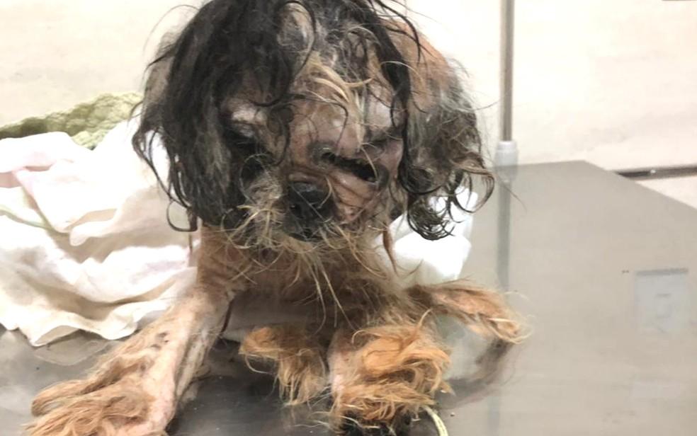 Cachorro é achado dentro de saco de lixo em Aparecida de Goiânia — Foto: Protetores dos Animais Goiânia/ Divulgação