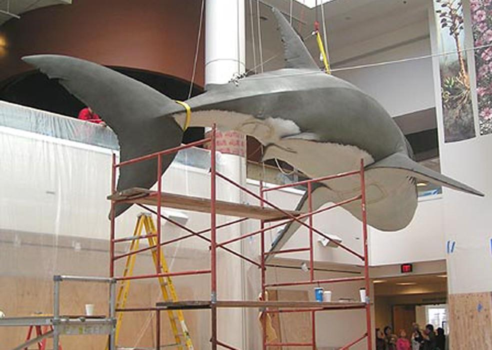 Figura de megalodonte é exposta no Museu de História Natural de São Francisco (Foto: Divulgação/MHNSF)