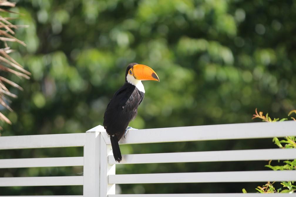 """Aves aparecem em centros urbanos atrás de alimento e são recepcionadas por """"amigos"""" da natureza (Foto: Giulia Bucheroni/TG)"""