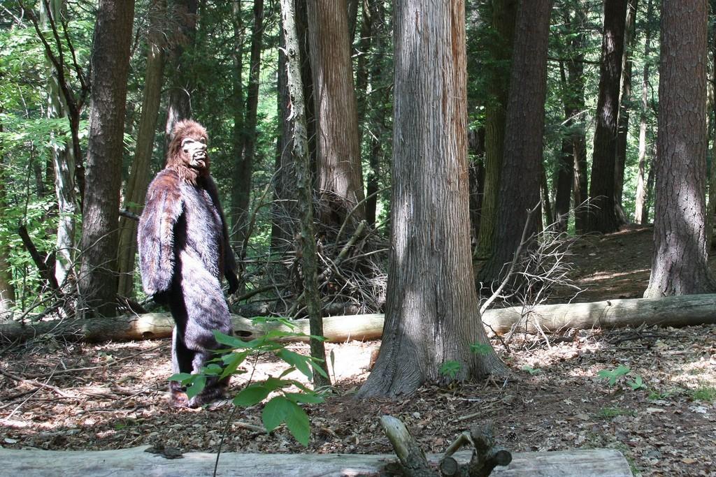Caçador obcecado pelo Pé-grande já atirou em pelo menos duas pessoas (Foto: Flickr/Derek Hatfiel/Creative Commons)