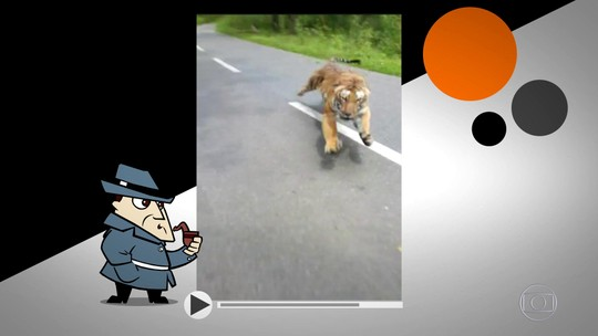 Detetive Virtual: vídeo de tigre perseguindo motoqueiro é verdadeiro ou falso?
