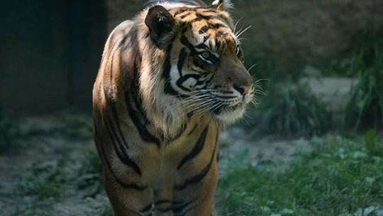Foto: (Reprodução/Facebook/Topeka Zoo)