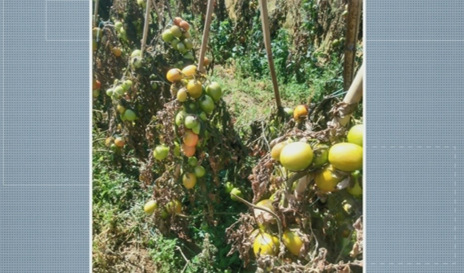 Preços de frutas, verduras e legumes sofrem alterações por causa da geada no Sul de Minas