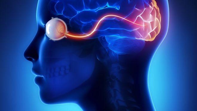 O efeito que se produz dentro do cérebro ao ver a imagem (Foto: Getty Images via BBC News Brasil)