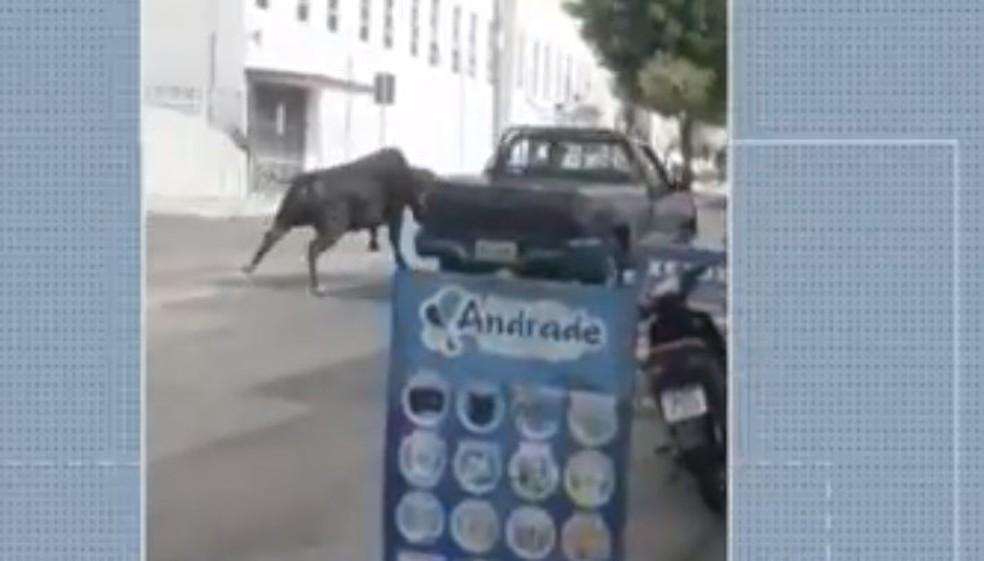Touro foge de matadouro e corre por ruas de cidade do interior do RN; veja vídeo — Foto: Reprodução