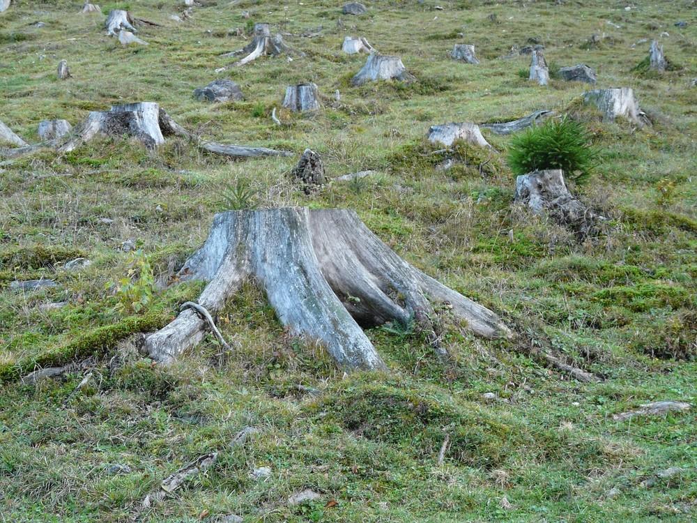 Mesmo as terras que foram desmatadas para servir de pastagens, por exemplo, podem voltar a ter florestas com a ajuda certa — Foto: Pixabay