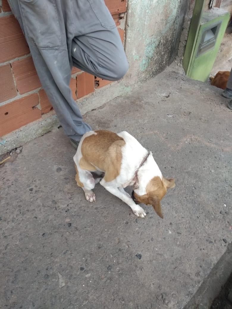 Cachorro é resgatado ferido após ser abandonado e amarrado em fio de cobre no RJ - Notícias - Plantão Diário