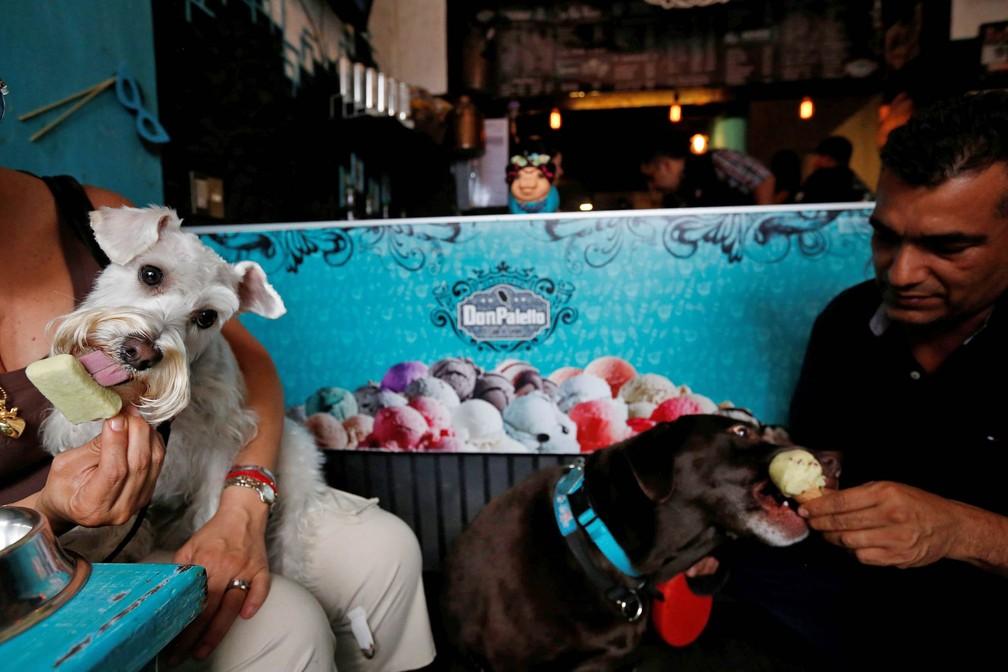 Cachorros tomam sorvete em sorveteria canina aberta na Cidade do México (Foto: Carlos Jasso/Reuters)