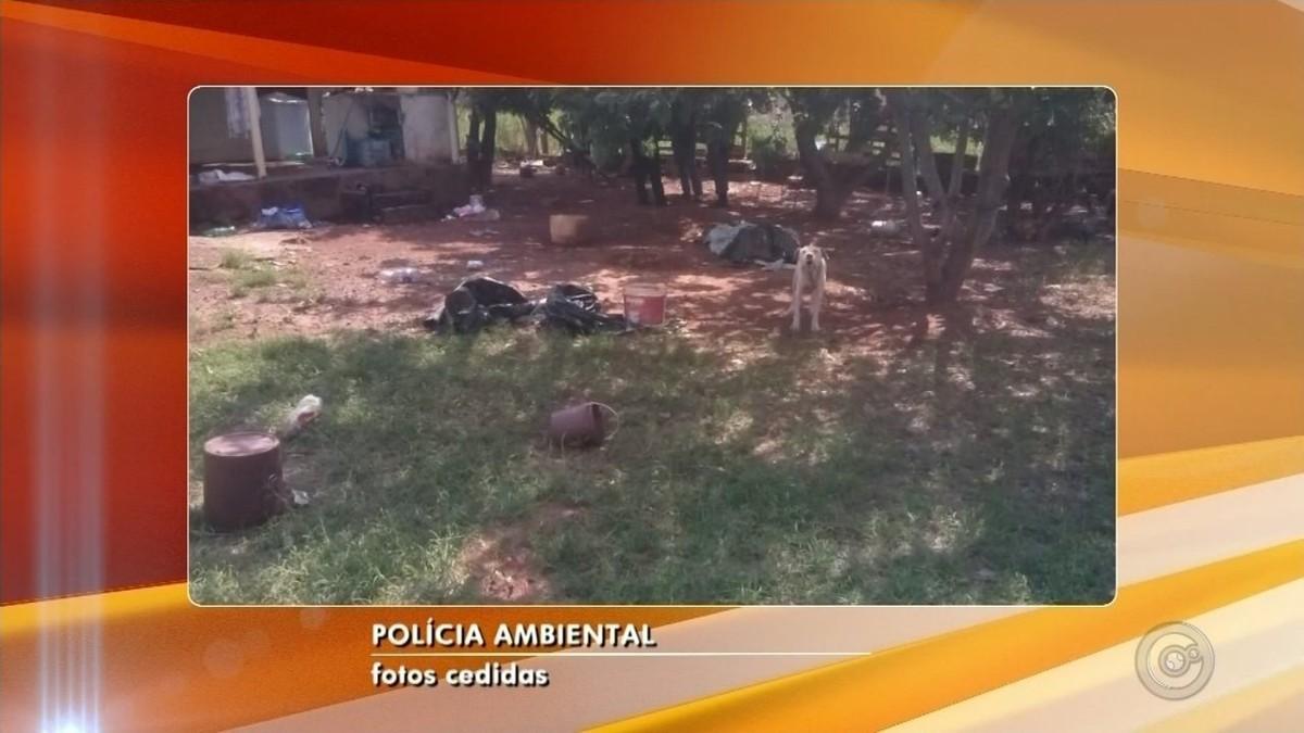 Homem é multado em R$ 9 mil por manter cães em situação de maus-tratos