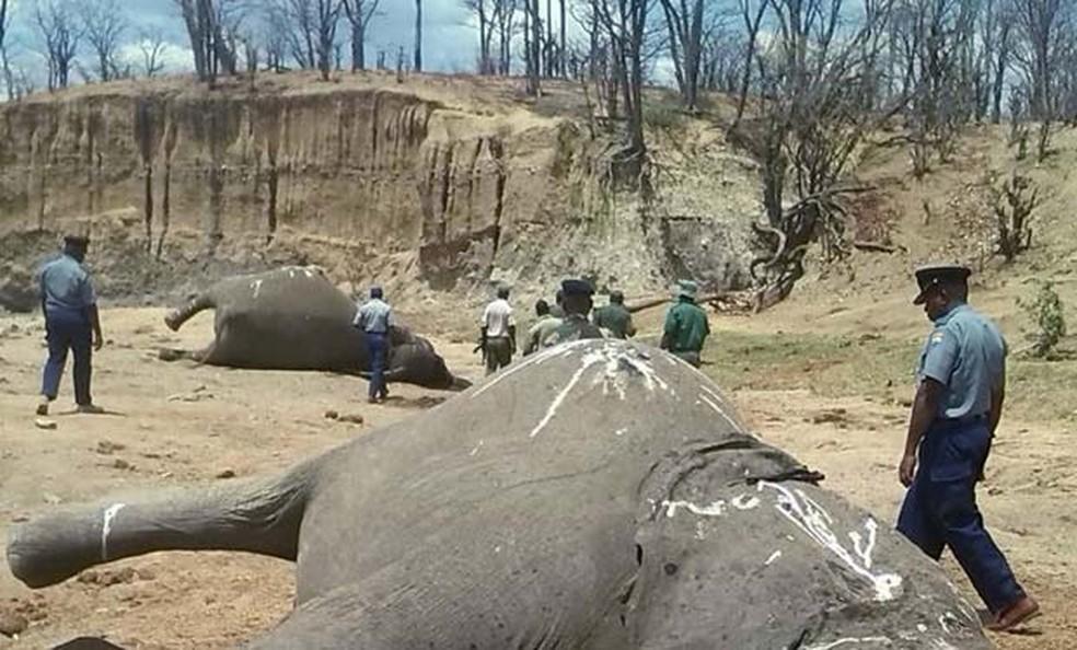 Elefantes aparecem mortos no parque nacional de Hwange, no Zimbábue, nesta segunda-feira (26) (Foto: REUTERS/Stringer)