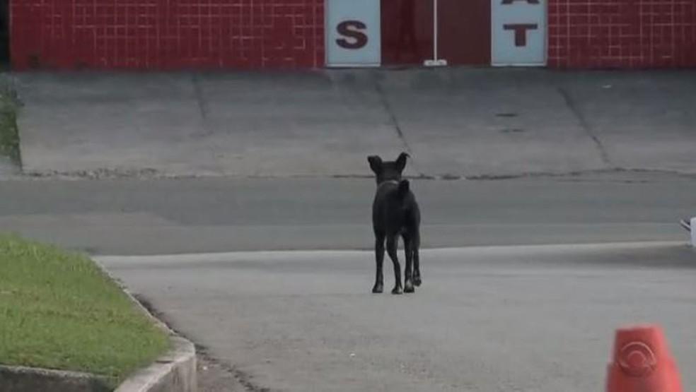 Cachorro Negão mora no pátio do hospital desde novembro de 2015 (Foto: Reprodução/RBS TV)