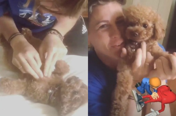 Tamra salvou o Nugget, o cãozinho de Katy Perry (Foto: Reprodução Instagram)