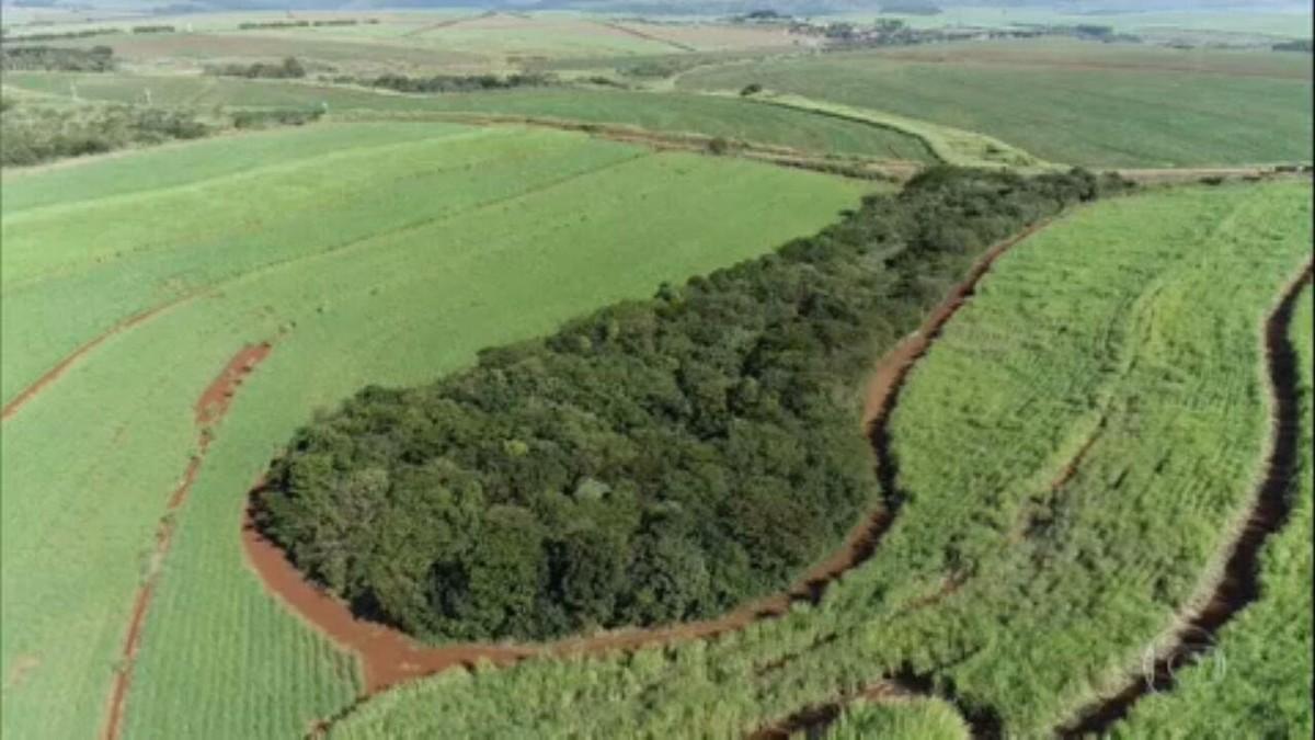 Usina de cana-de-açúcar restaura mata nativa e consegue renda com a preservação
