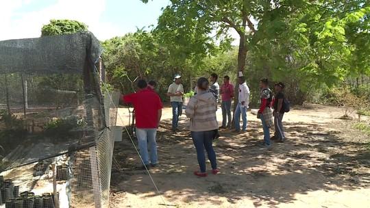 Agrofloresta em pleno sertão nordestino atrai atenção de universidades